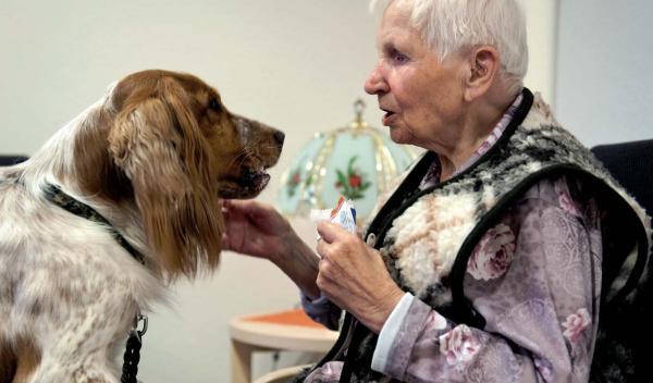 Helmut-Turck-Zentrum - Therapiehund